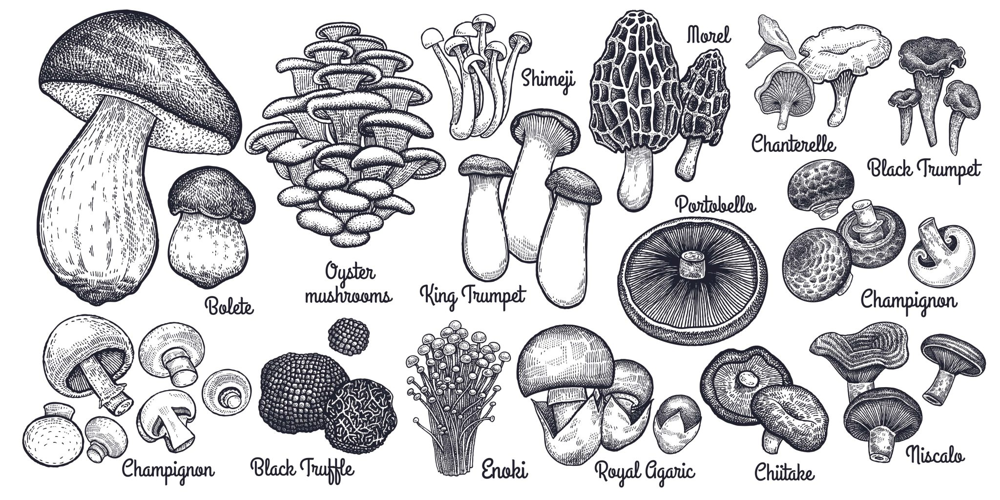 Two mushrooms per day could reduce cancer risk by 45%